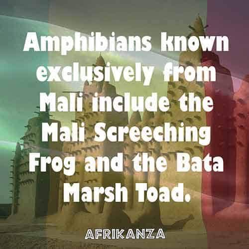 Amphibians known exclusively from Mali include the Mali Screeching Frog and the Bata Marsh Toad