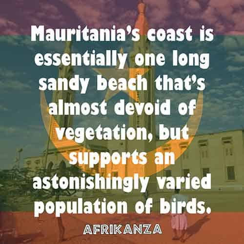 Mauritania's coast is essentially one long sandy beach that's almost devoid of vegetation, but supports an astonishingly varied population of birds