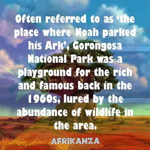 Often referred to as 'the place where Noah parked his Ark', Gorongosa National Park was a playground for the rich and famous back in the 1960s, lured by the abundance of wildlife in the area
