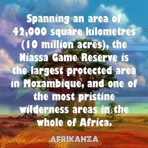 Spanning an area of 42,000 square kilometres (10 million acres), the Niassa Game Reserve is the largest protected area in Mozambique, and one of the most pristine wilderness areas in the whole of Africa
