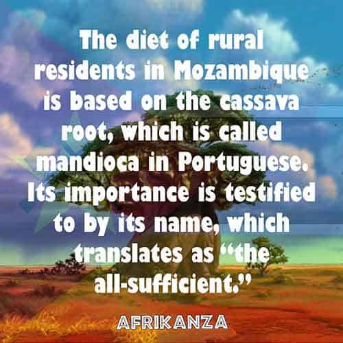 """The diet of rural residents in Mozambique is based on the cassava root, which is called mandioca in Portuguese. Its importance is testified to by its name, which translates as """"the all-sufficient"""