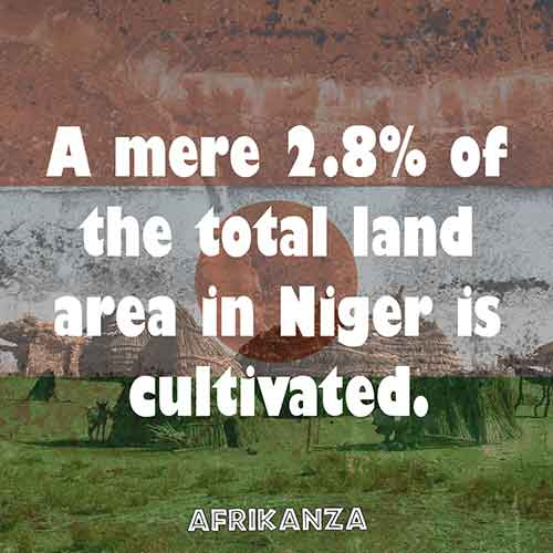 A mere 2.8% of the total land area in Niger is cultivated