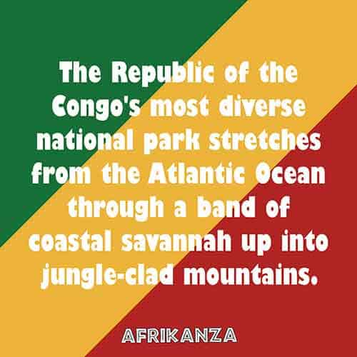 The Republic of the Congo's most diverse national park stretches from the Atlantic Ocean through a band of coastal savannah up into jungle-clad mountains
