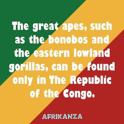 The great apes, such as the bonobos and the eastern lowland gorillas, can be found only in The Republic of the Congo