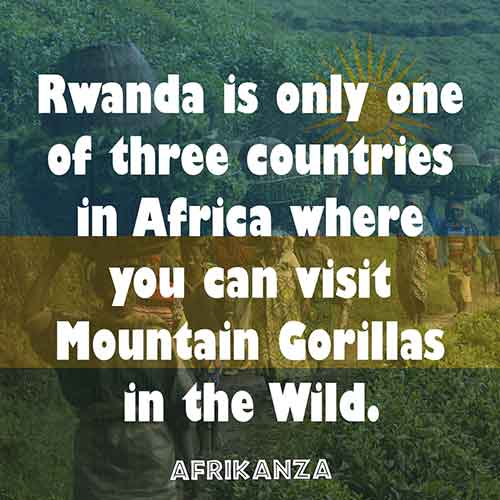 Rwanda is only one of three countries in Africa where you can visit Mountain Gorillas in the Wild.