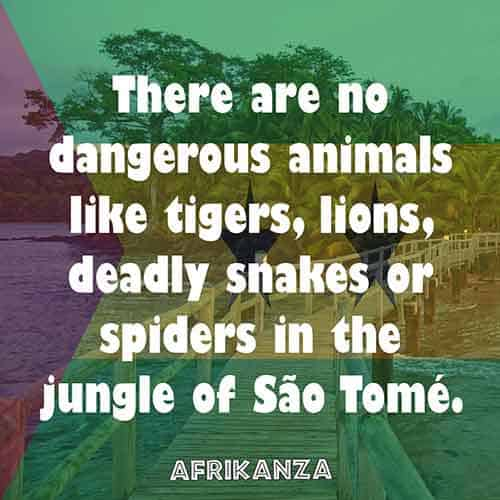 There are no dangerous animals like tigers, lions, deadly snakes or spiders in the jungle of São Tomé.