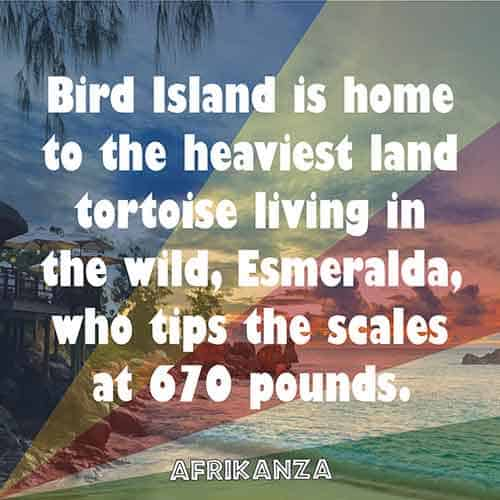 Bird Island is home to the heaviest land tortoise living in the wild, Esmeralda, who tips the scales at 670 pounds.