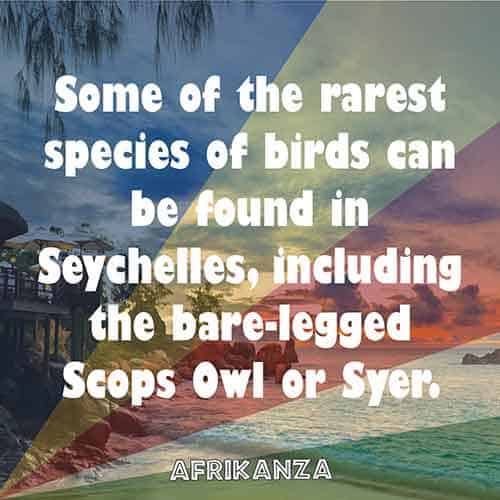 Some of the rarest species of birds can be found in Seychelles, including the bare-legged Scops Owl or Syer.