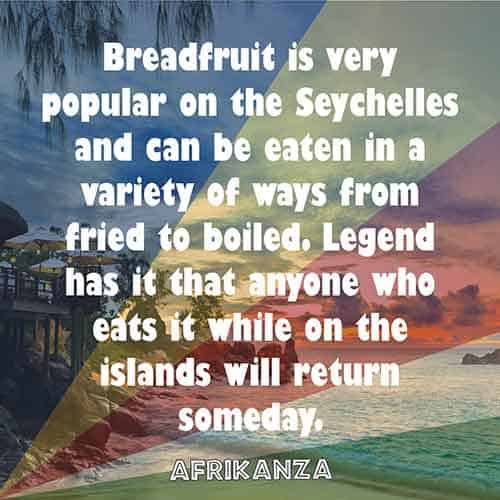 Breadfruit is very popular on the Seychelles and can be eaten in a variety of ways from fried to boiled. Legend has it that anyone who eats it while on the islands will return someday.