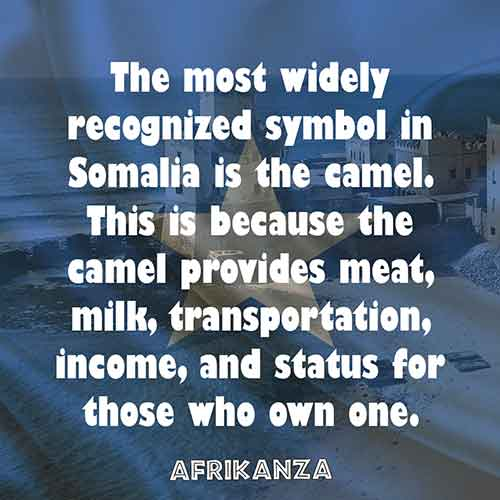 The most widely recognized symbol in Somalia is the camel. This is because the camel provides meat, milk, transportation, income, and status for those who own one.