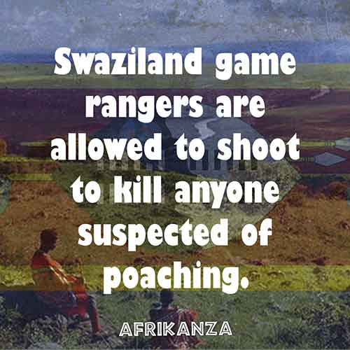 Swaziland game rangers are allowed to shoot to kill anyone suspected of poaching.