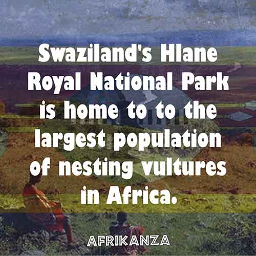 Swaziland's Hlane Royal National Park is home to to the largest population of nesting vultures in Africa.