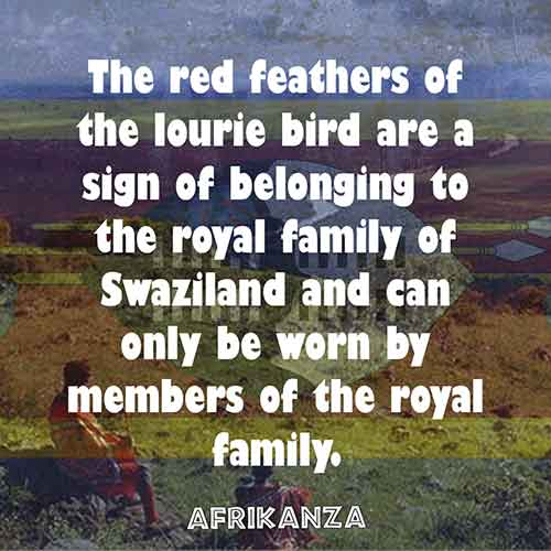 The red feathers of the lourie bird are a sign of belonging to the royal family of Swaziland and can only be worn by members of the royal family.