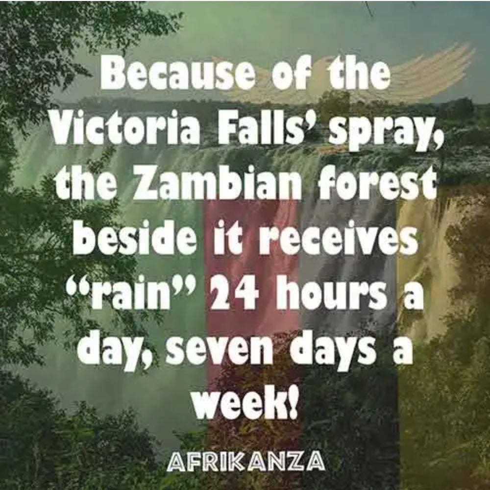 "The Zambian forest beside the Victoria Falls receives ""rain"" 24 hours a day, seven days a week!"