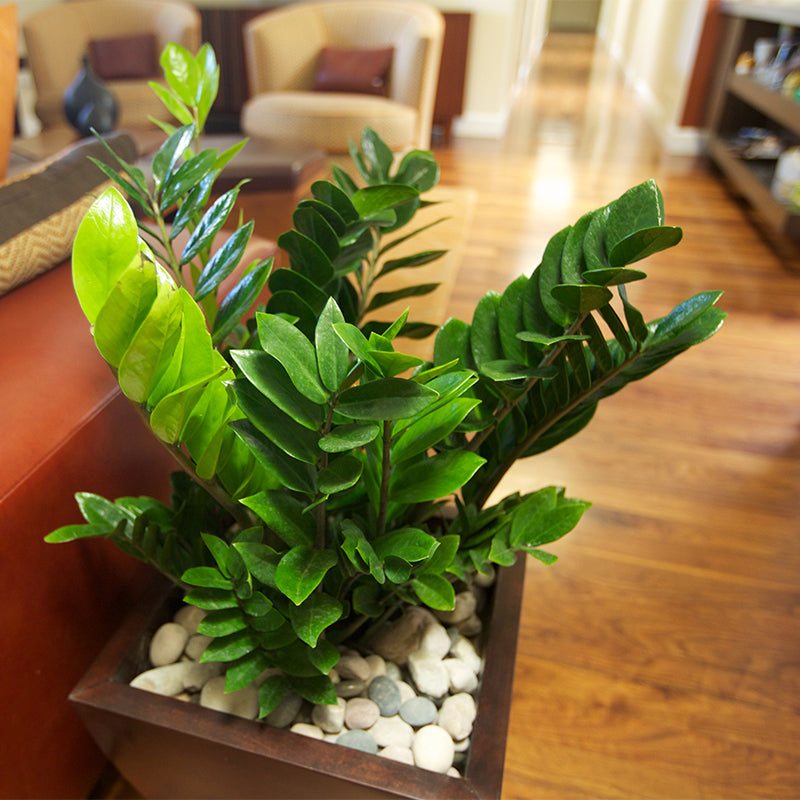 Photo of AGI plants in a local residence