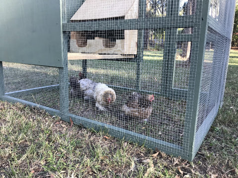 UT CHOOK CAGE LARGE