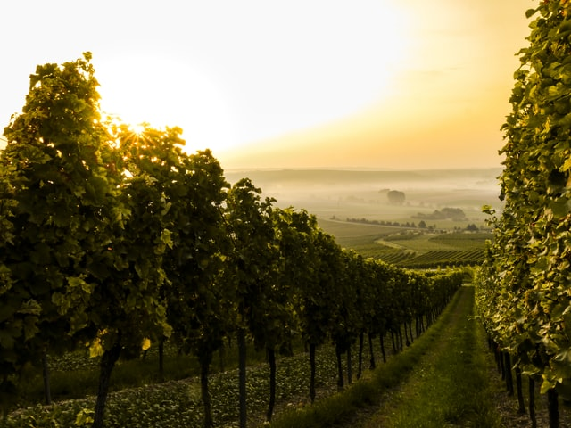 All you need to know your favourite Tuscan Wines
