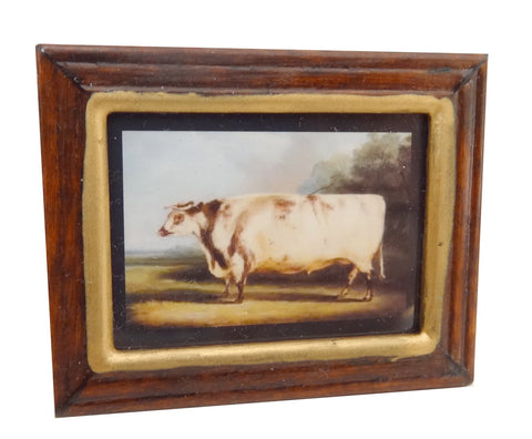Framed Print of a Cow