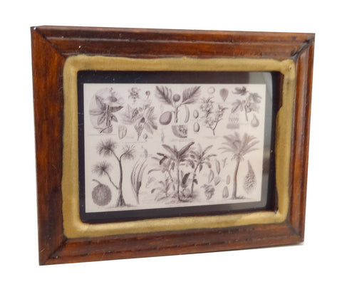 Framed Print of Botanical Drawings of Plants