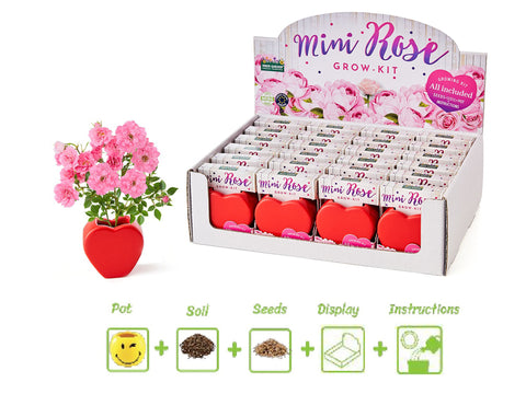 Valentines Grow Your Own Mini Roses