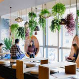 hanging plant rental for weddings vail