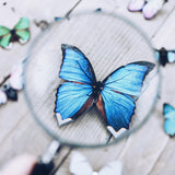 Blue Butterfly Hair Brooch
