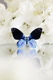 Ice Queen Butterfly Brooch