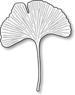 Impression Obsession - Gingko Leaf