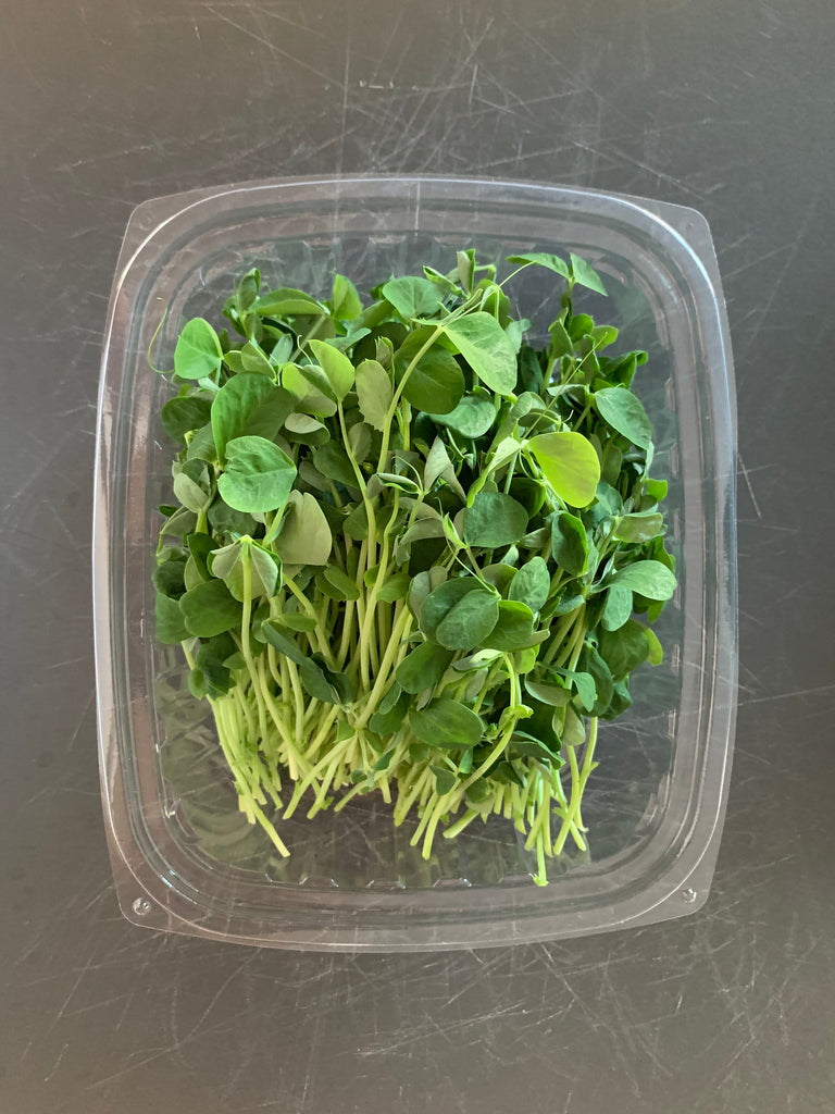 Wilder Acres - Organic Microgreens