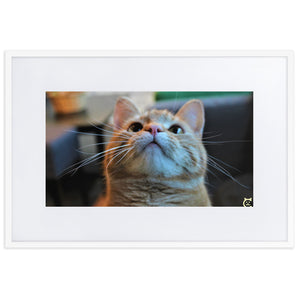 Cat looking up framed poster