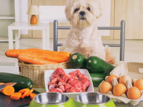 Nutrition & Canine Cuisine - From The WAG Magazine