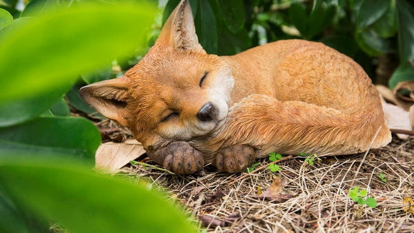 Fox Pup-Sleeping