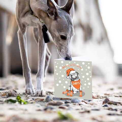 whippet dog sniffing Christmas card on a beach