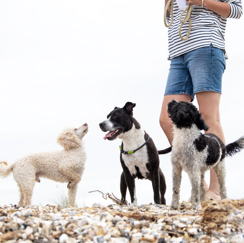 Three dogs standing on the beach