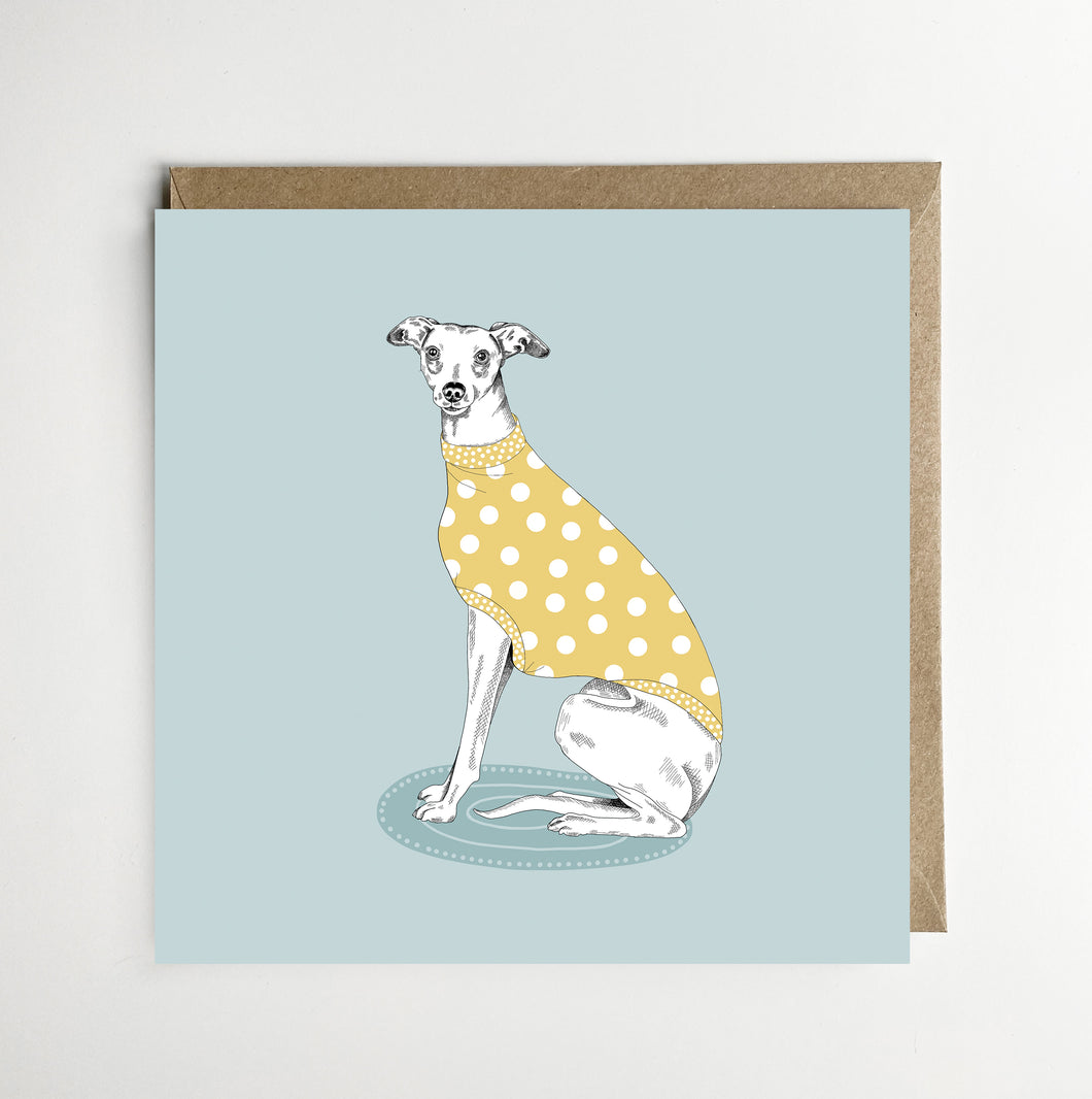 Whippet in Spotty Jumper