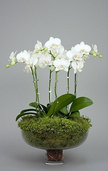 Express of Love Orchids
