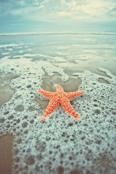 Starfish on beach Jolly Harbor Soap Market logo, natural skincare. Earth friendly skincare. sulphate free, no chemicals. Biodegradeable soap. sustainable products.