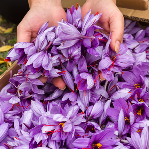 Harvesting saffron ethically and making sure farmers are paid fair share
