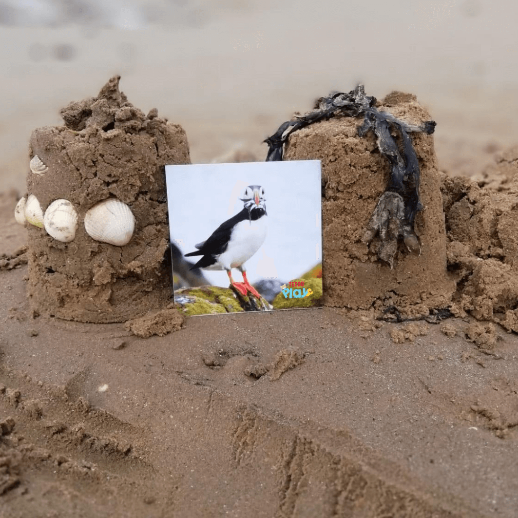 Puffin photo card play at the beach