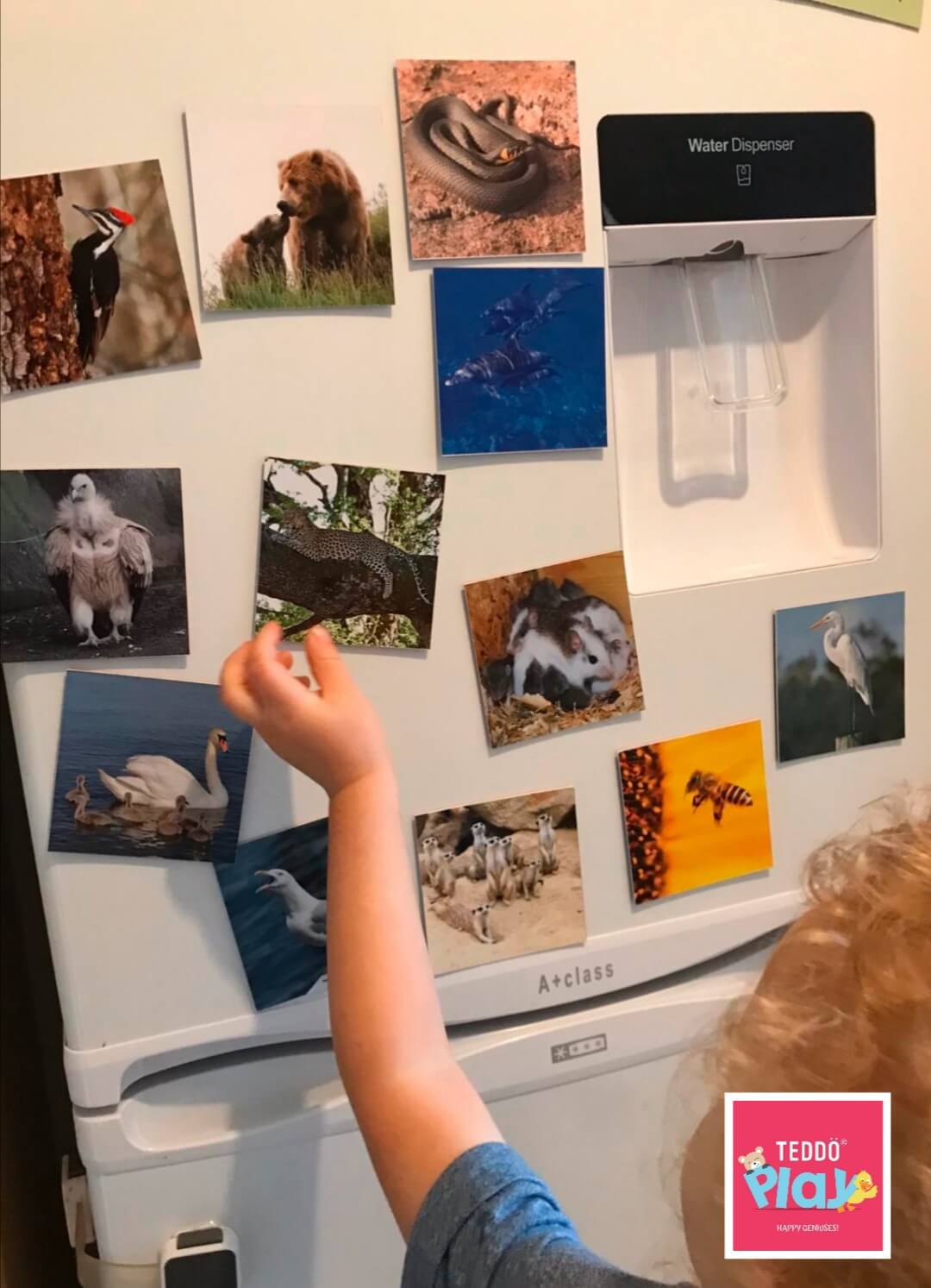 Animal fridge magnets for kids