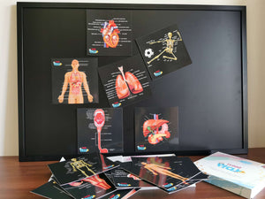 Human Organs, Body Parts, Skeletal System Learning Resource Magnetic