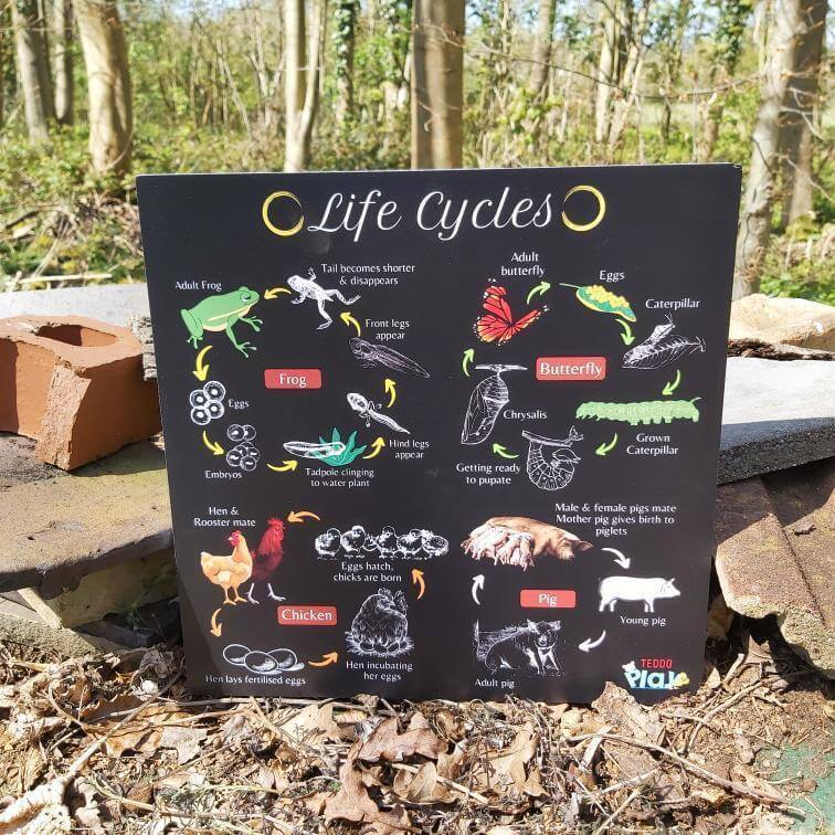 Forest school bug hotel life cycles for kids