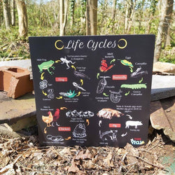 Life Cycles Portable Educational Poster Board (Large: 30x30cm)