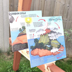 Water Cycle & Carbon Cycle Portable Educational Poster Boards (Large: 30x30cm)