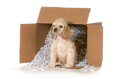 Blank Shredded Newsprint (Unprinted Puppy Paper)