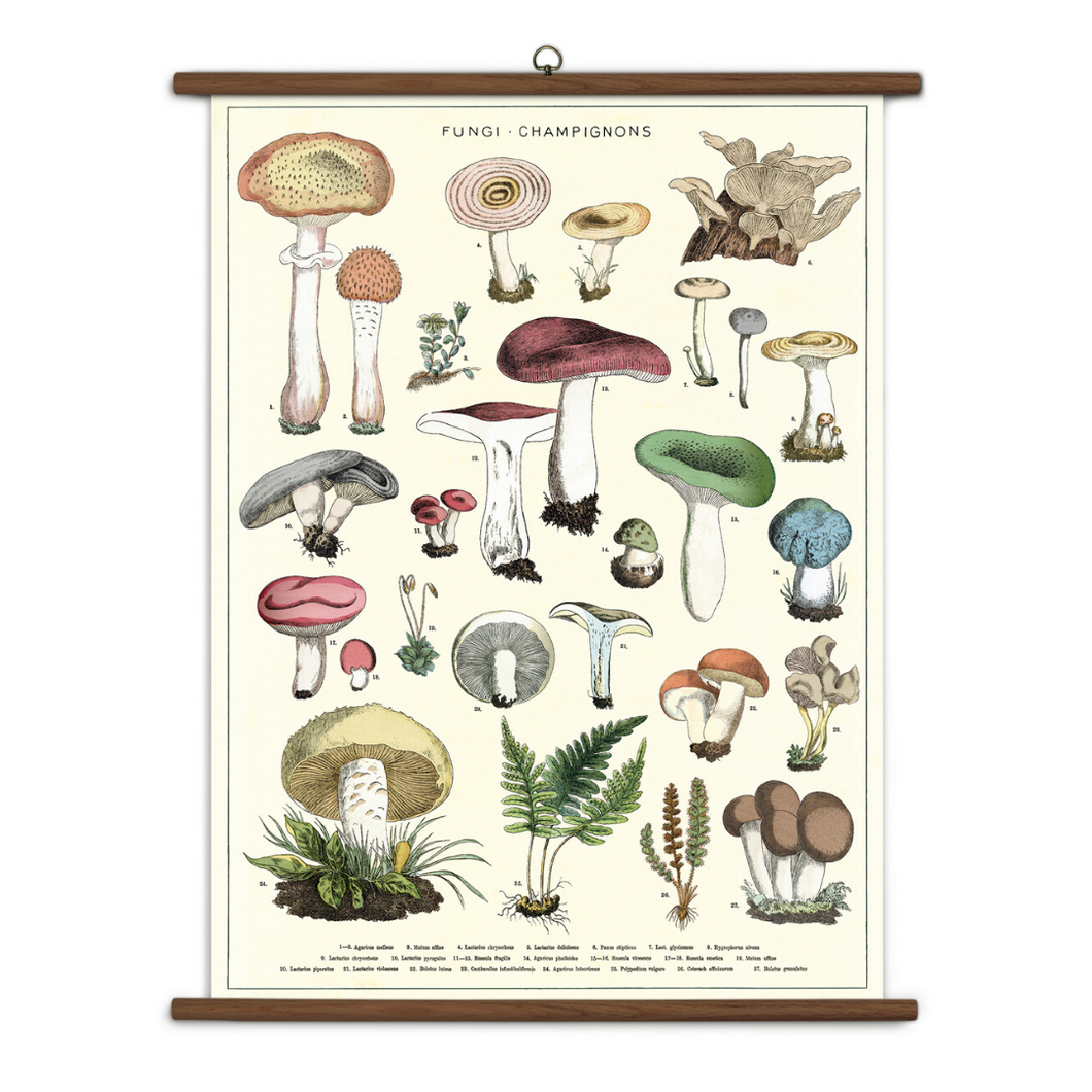 Fungi School Chart Wall Hanging