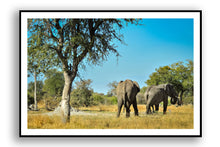 Load image into Gallery viewer, Africa (Botswana)  - Graceful Creatures