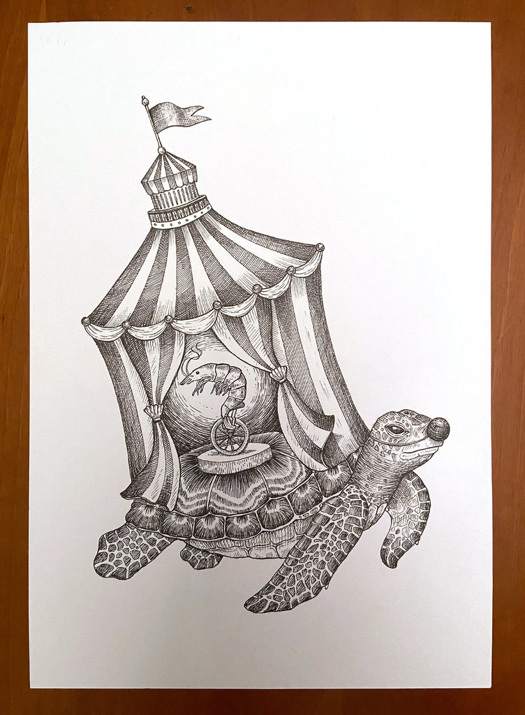 Turtle searcus ink drawing