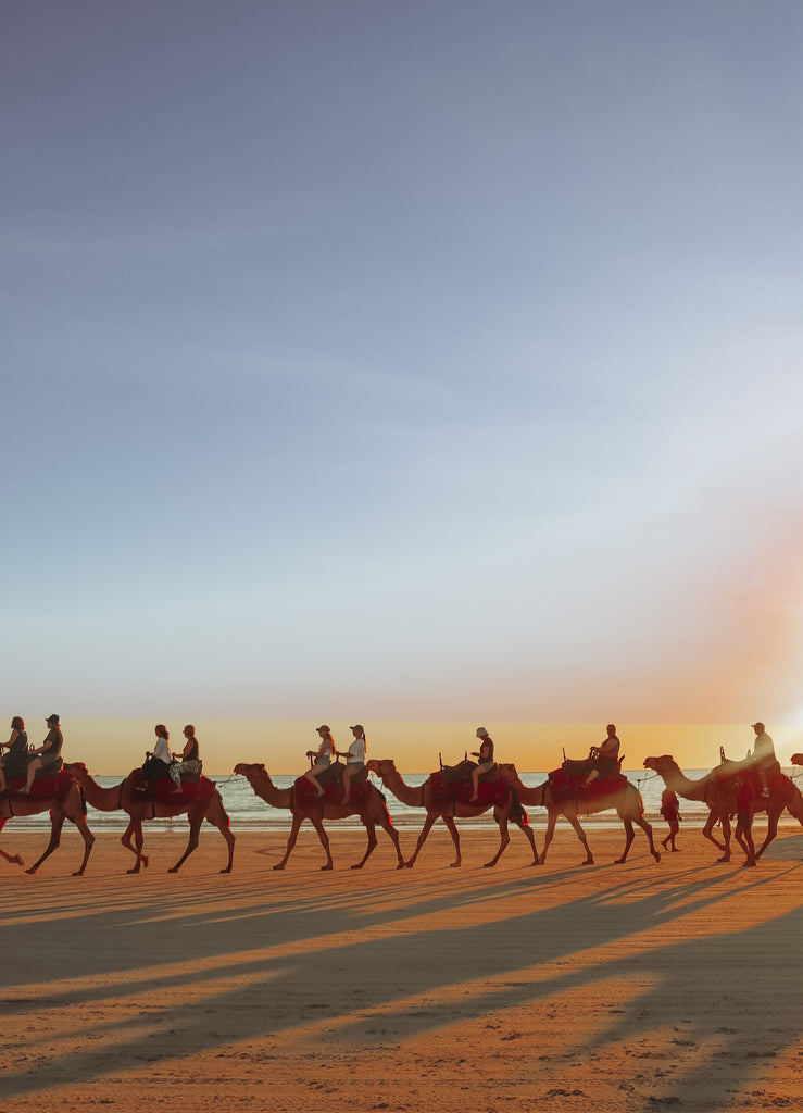 23 camels on cable beach at sunset