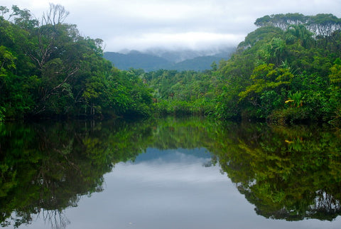 landscape picture of Madagascar protected area